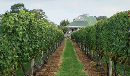 NUVO Magazine: Wines of Long Island, New York