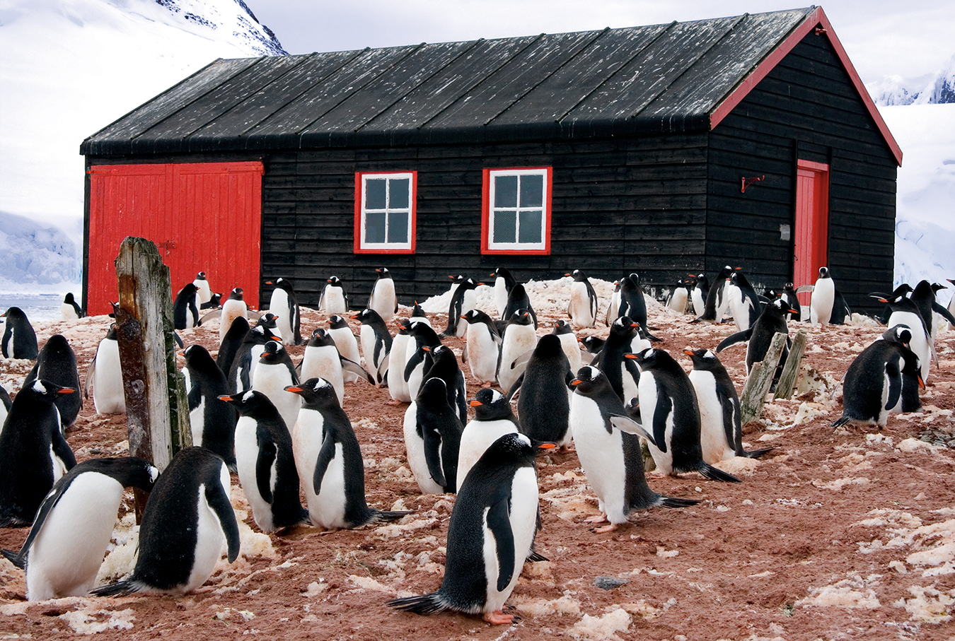 Nuvo Magazine: The Colourful South Pole