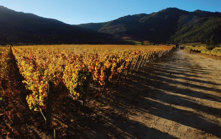 NUVO Magazine: Carmenère At The Viña Carmen Winery In Chile