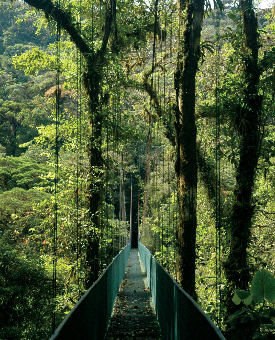 NUVO Magazine: The Pure Life Of Costa Rica
