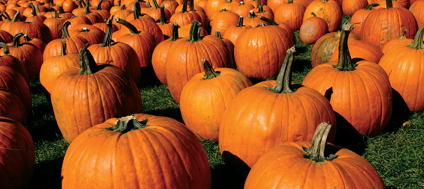 NUVO Magazine: The Keene Pumpkin Festival