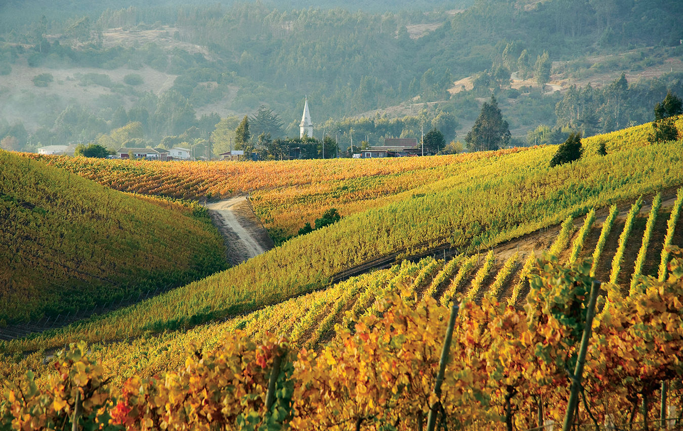 NUVO Magazine: Wines of Chile