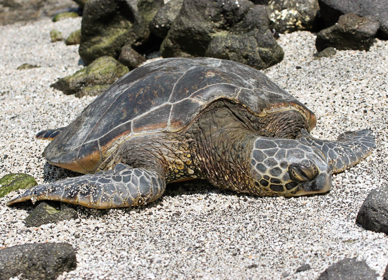 North Carolina's Sea Turtle Haven