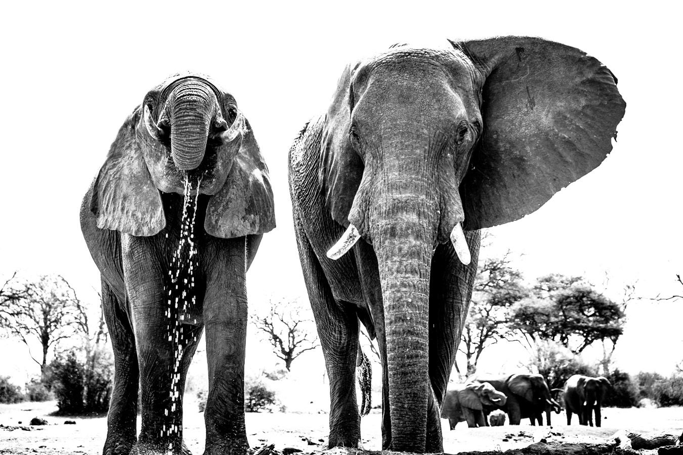 67ed7541b04a Elephants Archives