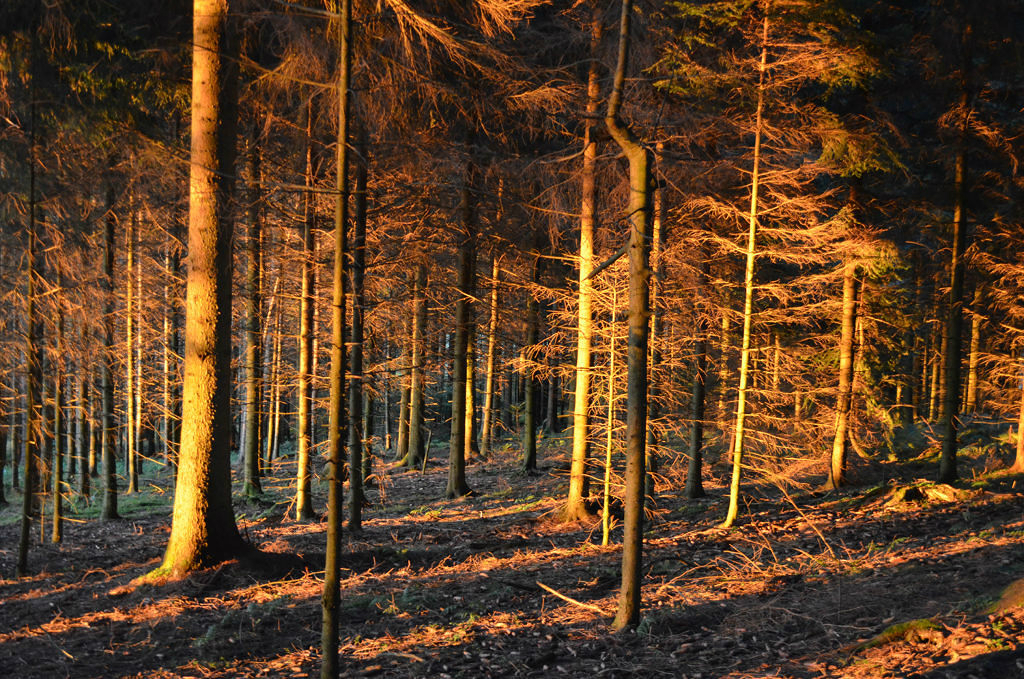 Daily Edit, Black Forest, Germany, Culinary Hikes