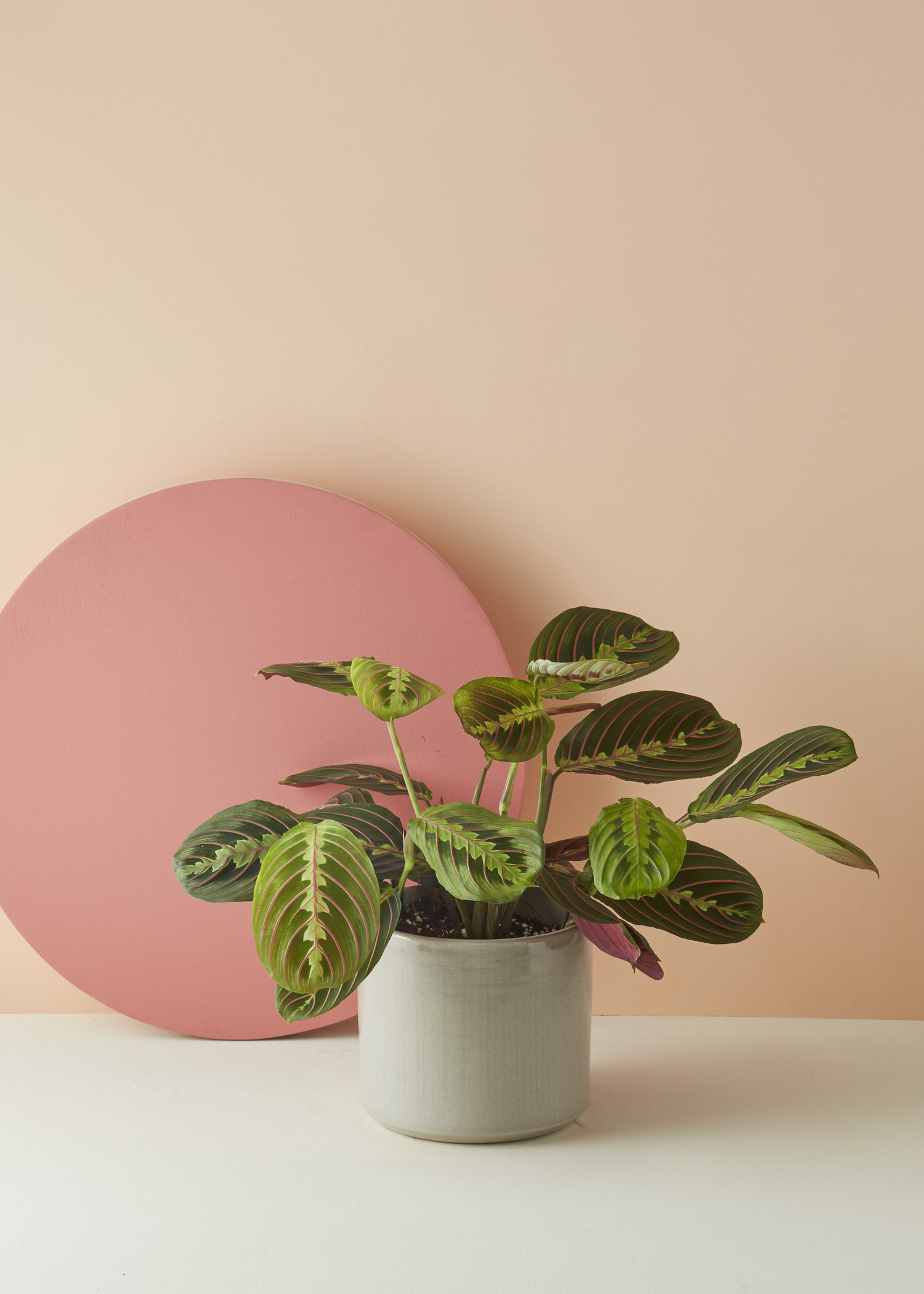 Weird, Wonderful Houseplants | NUVO on perennials with leaves, weeds with leaves, vegetables with leaves, seeds with leaves, animals with leaves, flowers with leaves, birds with leaves, bonsai with leaves, mushrooms with leaves, palms with leaves, bamboo with leaves, gardens with leaves, vines with leaves, succulents with leaves, marigolds with leaves, spring with leaves, pumpkins with leaves, lilies with leaves, trees with leaves, berries with leaves,