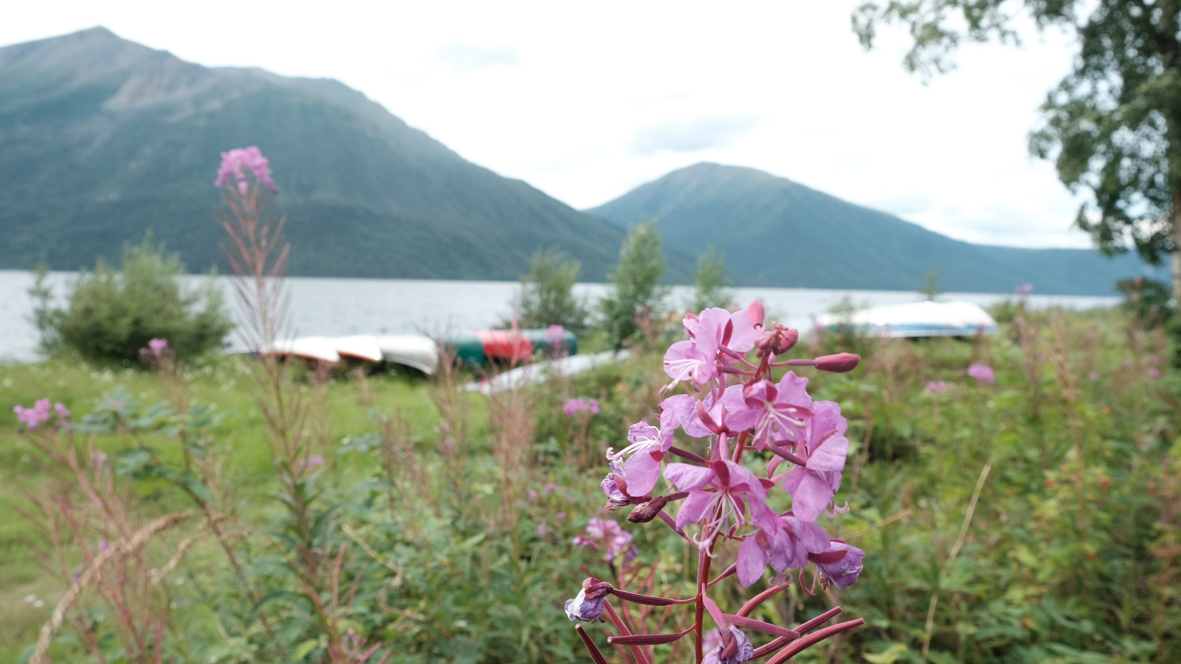 For the Love of Nature in the Yukon