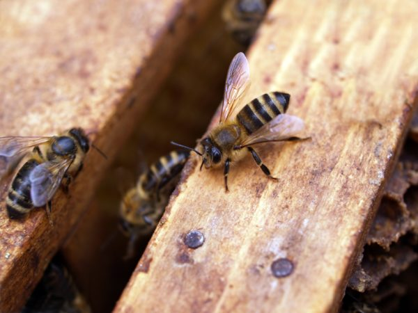 Sip, Savour, and Save The Bees