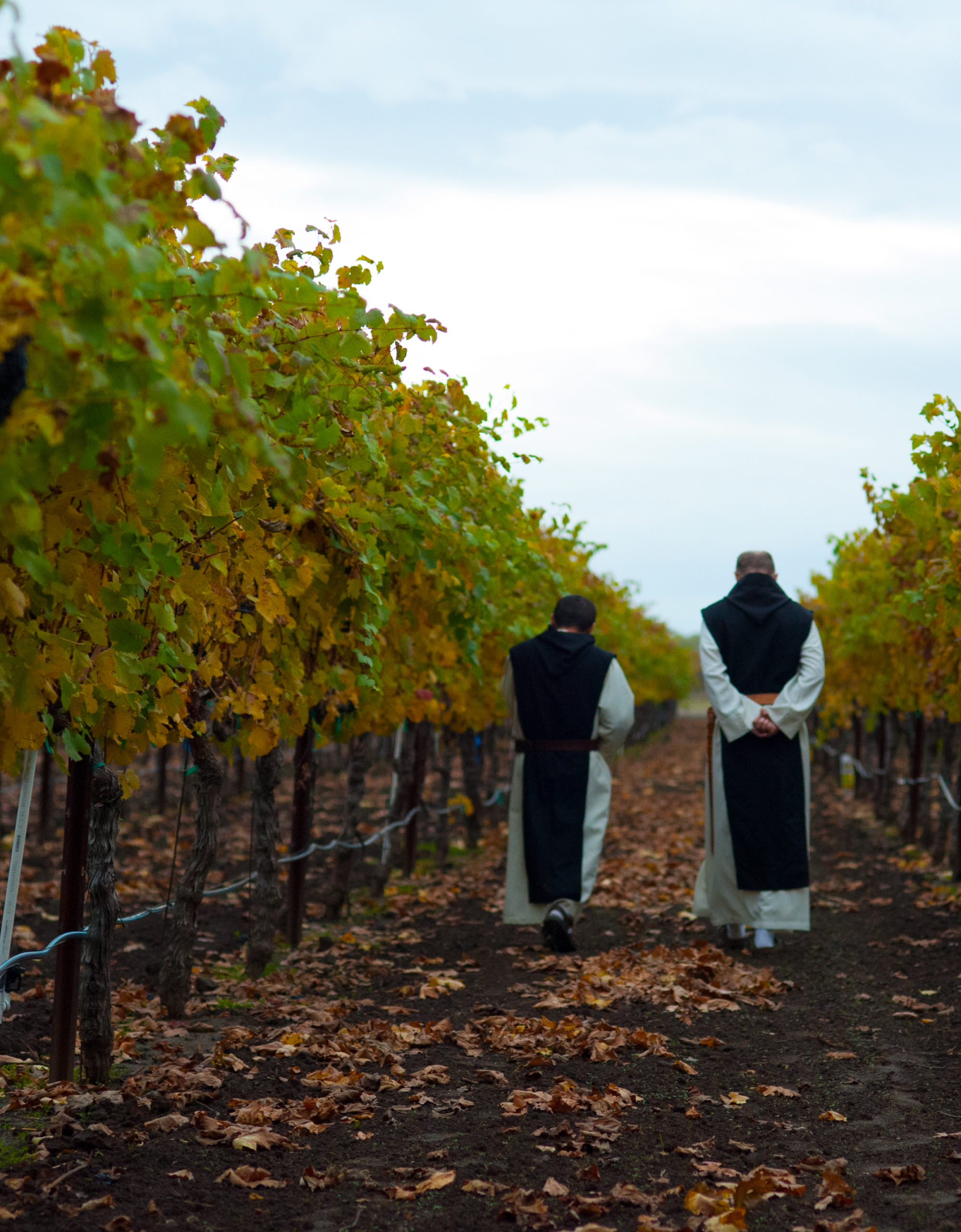 monk in the California vineyard