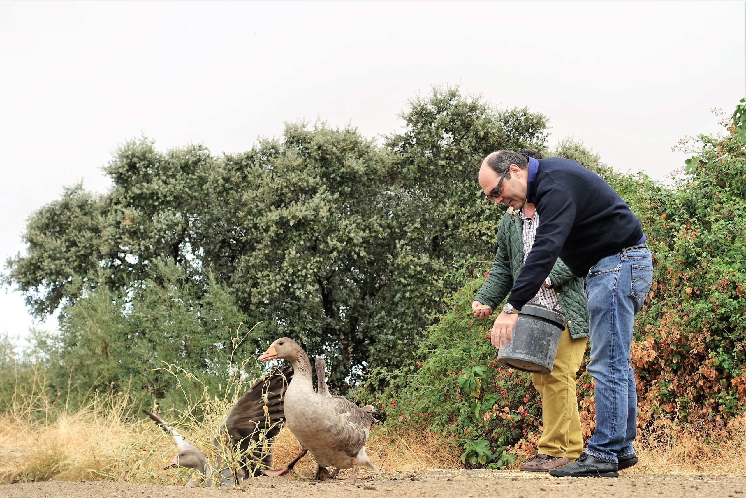 cruelty free foie gras. two chefs feed geese.