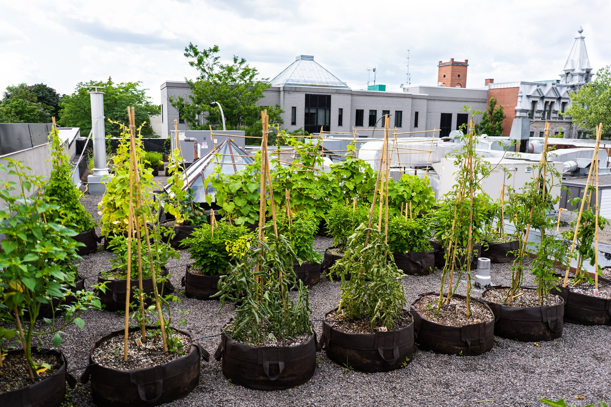 Montreal rooftop garden at Projet Pilote